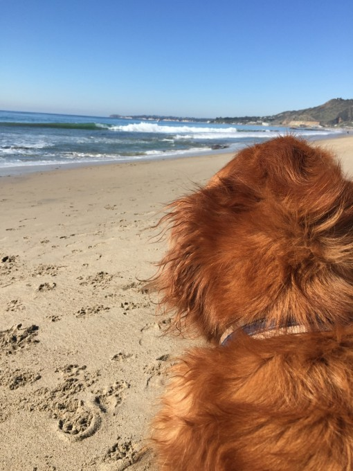 Gus in Malibu | Covet Living