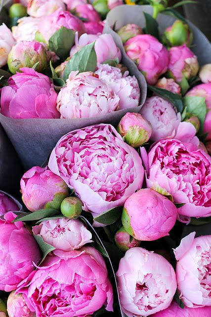 Peonies | Covet Living