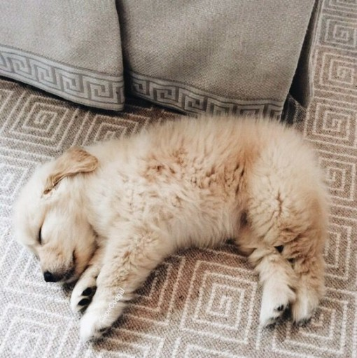 Baby Golden | Covet Living