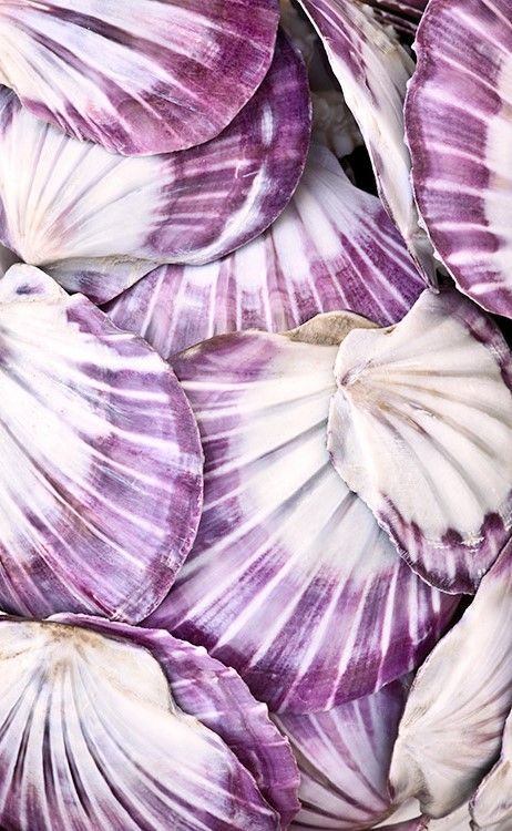 Purple Seashells | Covet Living